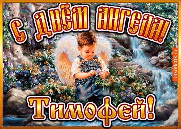 Днем, открытки с днем ангела тимофея