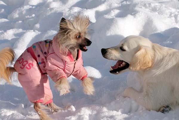 Прикольные, картинки собак со смешными надписями