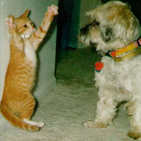 Надписью тоже, смешные картинки про собак и кошек с надписями до слез