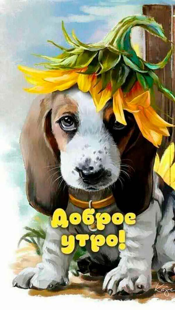 Для любимого, открытки доброе утро с животными